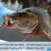 tackle world, the art of observation, fishing tackle, fishing tips, how to fish better, tackle store,