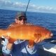 Tackle World's Local Hero Mick Lawrance with his first Coral Trout
