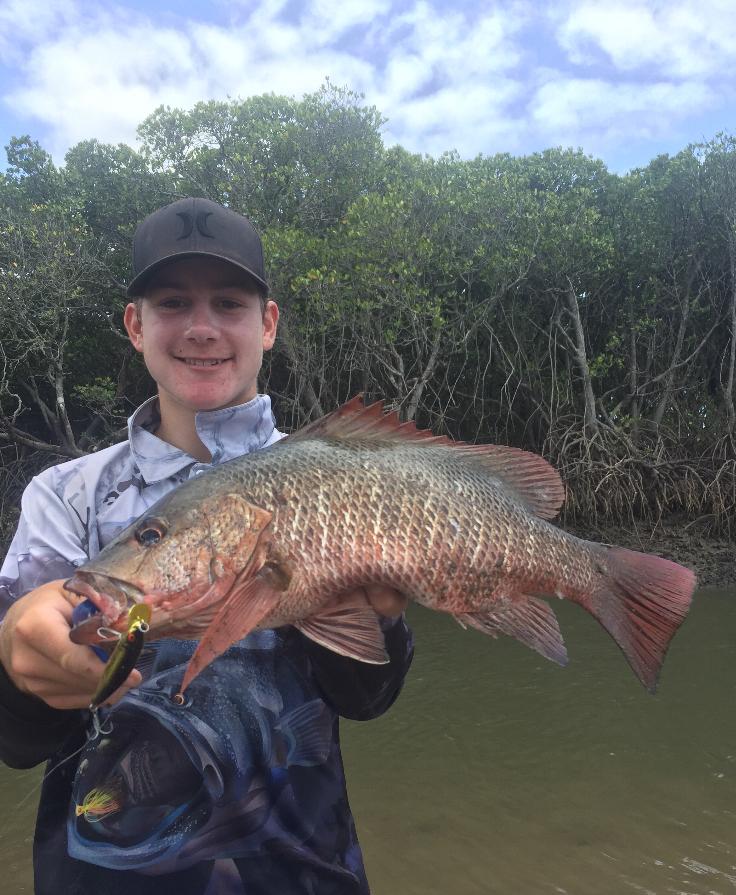 Local Hero Will mangrove jack